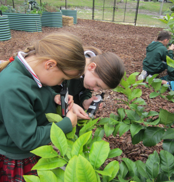 Microscopes for Schools | Rotary Club of Hillarys